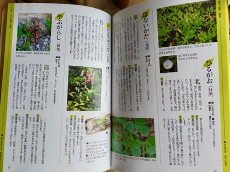 食べられる野草がいっぱい!!